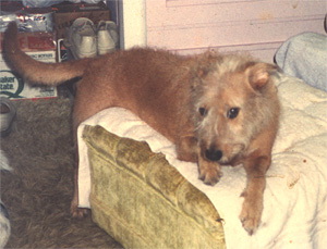 Photo of my dog Cindy, 1989 - 05.05.02.